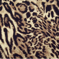 Cotton Animal Print Cinnamon