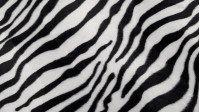 Velboa Zebra Print fabric - Velboa hair fabric, short and soft, with black stripes on a white background imitating the skin of a zebra. The fabric is 150cm wide and its composition 100% polyester.